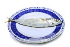 Atlantic mackerel Royalty Free Stock Photos