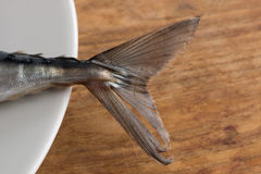 Atlantic Mackerel close up of tail Stock Photography
