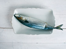 Atlantic mackerel Royalty Free Stock Photography