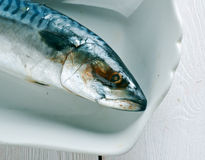 Atlantic mackerel Royalty Free Stock Image