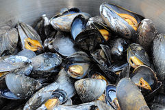 Atlantic Mussels. A pot of freshly steamed Atlantic Mussels Stock Photography