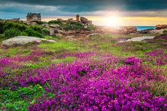 Atlantic ocean coast in Brittany region, Ploumanach, France, Europe. Magical sunset with colorful flowers in Perros-Guirec on Pink Granite Coast, Brittany Royalty Free Stock Photo