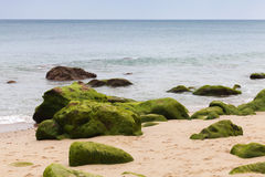Atlantic ocean coast with green stones in algae Stock Photos