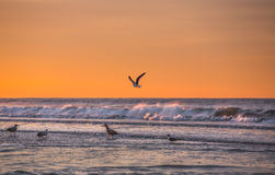 Atlantic Ocean coastline. Birds on the oceanfront. Atlantic Ocean coastline near New York in the area of Rockaway Park Stock Photography