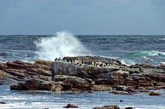 Atlantic ocean coastline by Cape of good hope. Stock Photography