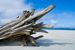 Atlantic ocean driftwood Stock Photography