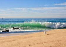 Atlantic Ocean kust royaltyfria bilder