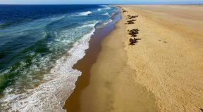 Atlantic ocean shore with seals in Namibia, Africa stock photos