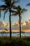 Atlantic Ocean Sunrise through palm trees. Sunrise on the Atlantic ocean with golden ball and a few clouds.  rolling waves onto the sandy beach with pier in Royalty Free Stock Photos