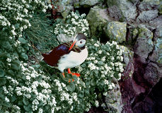 Atlantic Puffin. An Atlantic Puffin with a mouthful of grasses stands on a rock in a sea of wildflowers Royalty Free Stock Photos