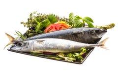 Atlantic raw sardine. Isolated on white background Royalty Free Stock Photography