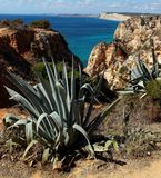 Atlantic rocky sunshiny coastline Algarve, Portugal. Agawe and viev of Atlantic rocky sunshiny coastline in Algarve, Portugal Stock Photos