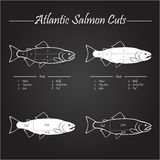 Atlantic salmon cuts diagram Stock Images
