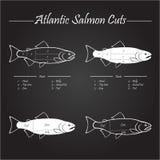 Atlantic salmon cuts diagram Stock Images
