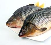 Atlantic Salmon Stock Images