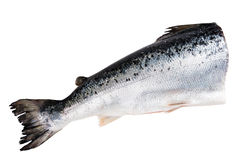 Atlantic salmon isolated  on white with clipping path Stock Image
