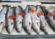 Atlantic Salmon on market dispaly. Fresh Atlantic Salmon on a market display, label contains no trademarks Royalty Free Stock Images