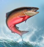 Atlantic salmon or pink salmon background on waves realismc illustration. Red salmon. Fishing on the river northern fish. Brown trout square format