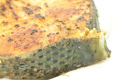 Atlantic salmon salar Royalty Free Stock Photo