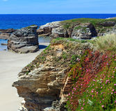 Atlantic sandy Islas beach Spain. Summer blossoming Atlantic beach Islas Galicia, Spain with white sand and pink flowers in front Royalty Free Stock Photo