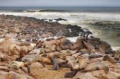 Atlantic seals Stock Photography