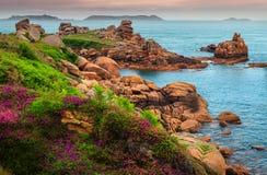 Atlantik-Küstenlinie mit bunten Blumen und Klippen, Ploumanach, Frankreich Stockfotografie
