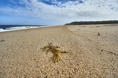 Atlantik-Ufer am Kap-Code Lizenzfreie Stockfotos