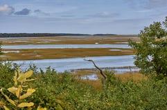 Atlantik-Ufersumpf Lizenzfreie Stockfotografie
