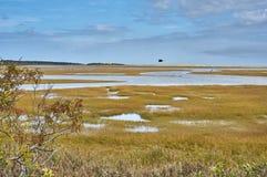 Atlantik-Ufersumpf Stockfoto