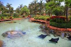 atlantis bahamas Arkivbilder