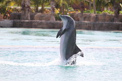 atlantis bahamas delfinshow Royaltyfri Fotografi