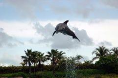 Atlantis delfinu Cay doświadczenie Zdjęcia Stock