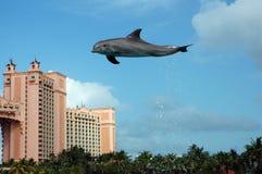 Atlantis delfinu Cay doświadczenie Zdjęcie Stock
