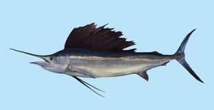 Atlantisch zeilvis visserijportret stock fotografie