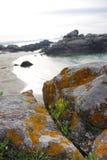 Atlantische flora dichtbij Samil-strand in Vigo, Vigo, Galicië, Spanje stock foto