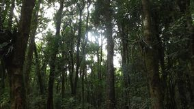 Atlantische Florest royalty-vrije stock afbeelding