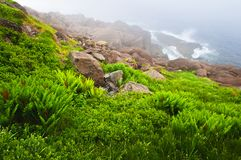 Atlantische Küste in Neufundland stockfotos