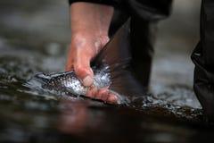 Atlantische Lachse - Fang und Freigabe stockfotos