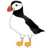 Atlantische Papegaaiduiker (arctica Fratercula) royalty-vrije illustratie