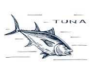 Atlantischer Bluefinthunfisch für Sushi Stockfotografie