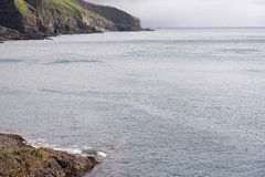 Atlantischer Papageientaucher, Fratercula arctica stockbilder
