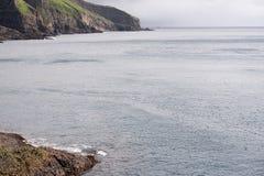 atlantisk fraterculapuffin för arctica arkivbilder