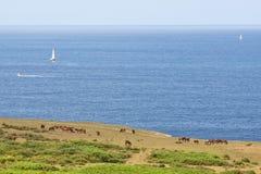 atlantisk kust Royaltyfri Fotografi