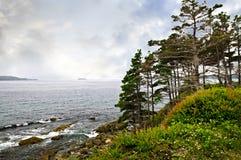 atlantisk kust newfoundland Royaltyfri Fotografi