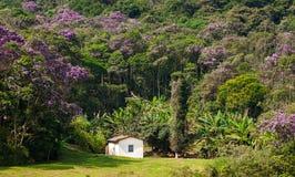 Atlantisk skog, Brasilien Fotografering för Bildbyråer