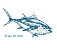 Atlantycki Bluefin tuńczyk ilustracji