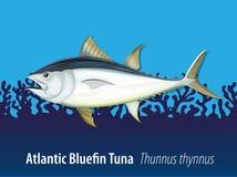 Atlantycki bluefin tuńczyk w morzu royalty ilustracja