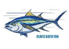 Atlantycki tuńczyk ilustracja wektor