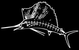 Atlantyckiego sailfish gemowy połów na czarnym tle royalty ilustracja