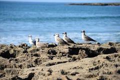 Atlantyk wybrzeże w Maroko Zdjęcia Royalty Free